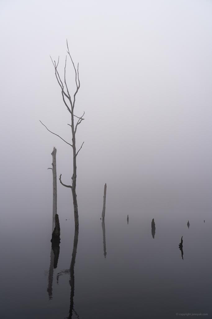 Dead Trees photo